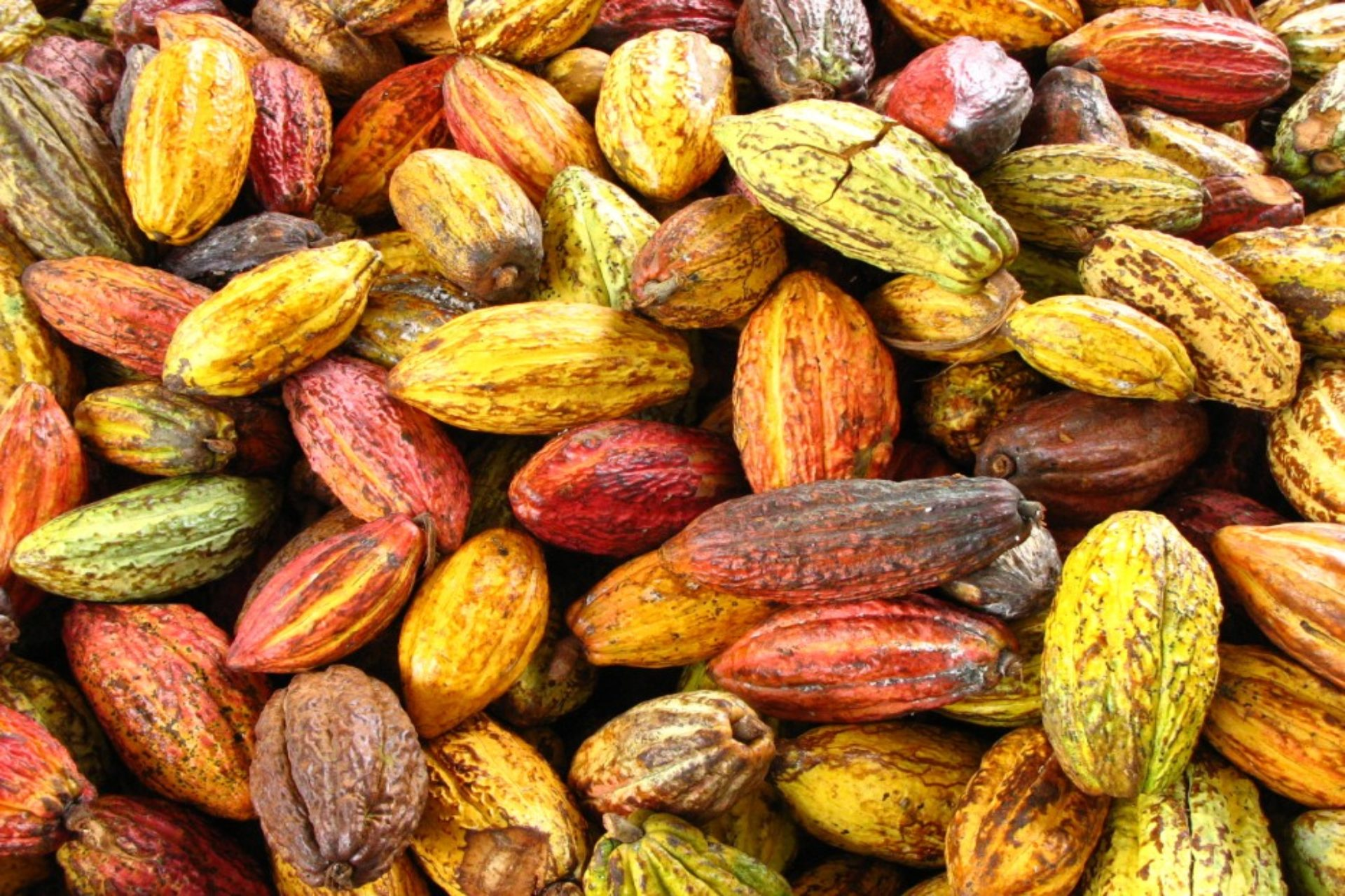 cocoa-production-in-nigeria