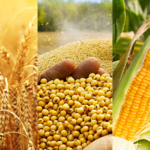 Impact of food quality standards on agricultural trade