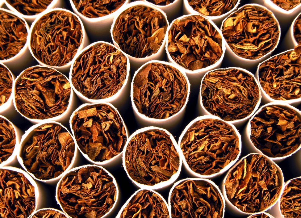 essay on tobacco consumption (2015) the relation between cigarette price and hand-rolling tobacco consumption in the uk: an ecological study bmj open 5:6, e007697-e007697 132 i berlin.